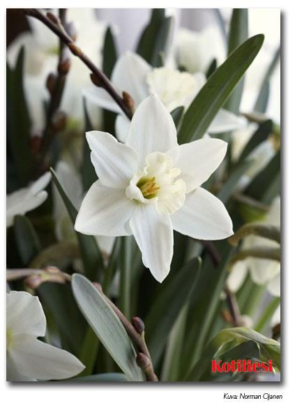 Lähetä kukka-aiheinen pääsiäiskortti sähköisenä e-korttina