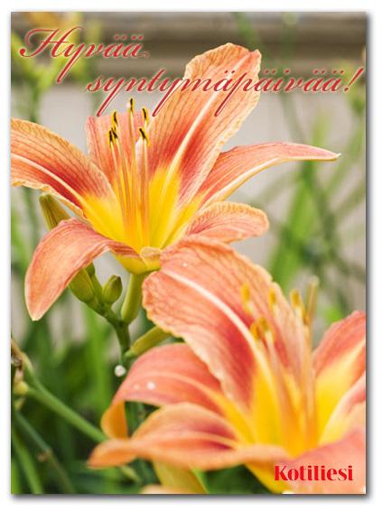 Lähetä syntymäpäiväonnittelu oranssein kukkasin Kotilieden e-kortilla!