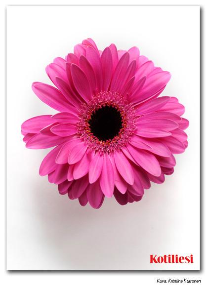 E-kortti pinkillä kukalla