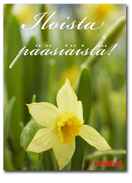 Lähetä narsissiaiheinen Iloista pääsiäistä e-kortti!