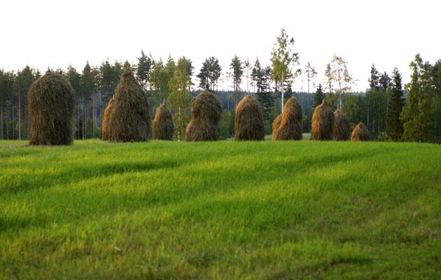 Heinäseipäät pellolla