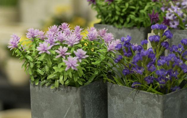 kukkia ruukuissa
