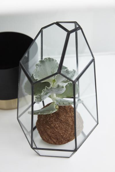 Istuta viherkasvit ja mehikasvit herbaarioon.