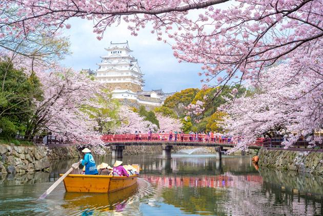 Kirsikankukat kukkivat keväällä