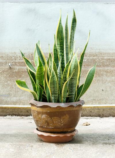 Huonekasvit piristävät sisustusta ja puhdistavat ilmaa