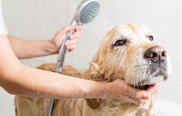 Irtokarvat valtaavat koiranomistajan asunnon