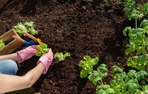 nainen istuttaa taimia puutarhassa