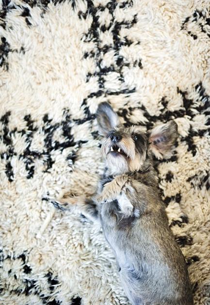 Raaka-Rå-keramiikka-astioiden tekijän Leena Kouhia koira