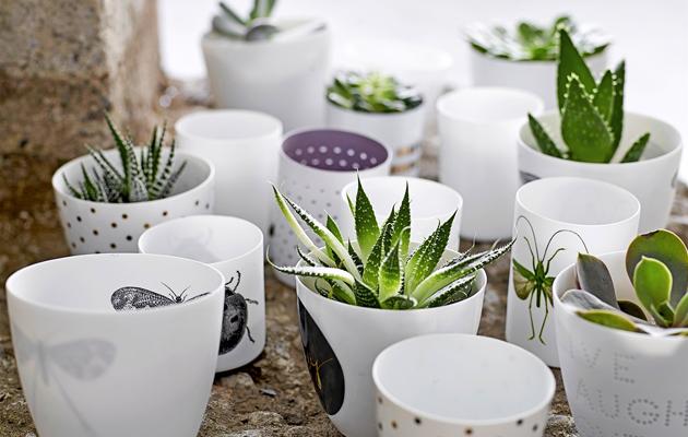helppohoitoinen kaktus, kotiliesi