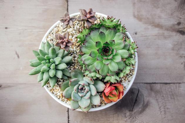 mehikasvit sopivat laiskalle puutarhurille