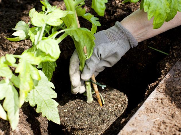 Kuva - 14 vinkkiä aloittelevalle puutarhurille: Muista nämä ensimmäisenä keväänä