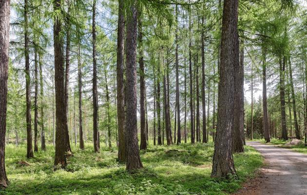 Punkaharjun puulajipuisto
