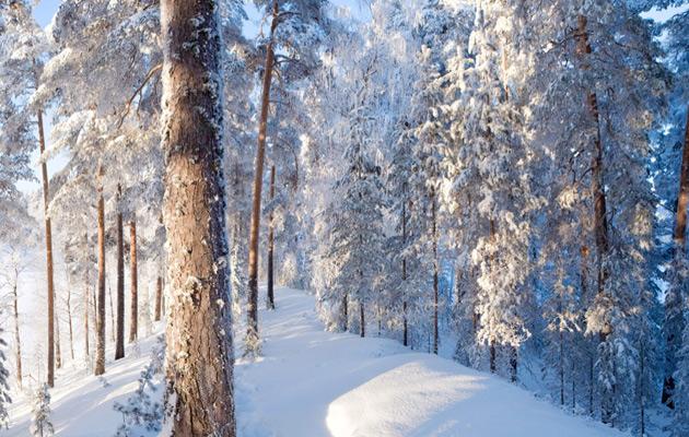 Luminen Punkaharju