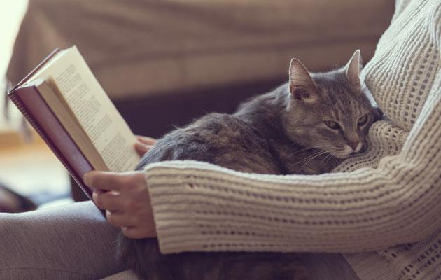 kissa makaa sylissä