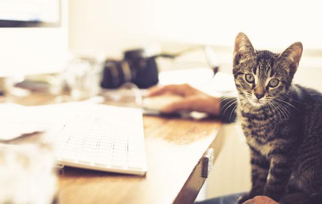 kissa istuu sylissä