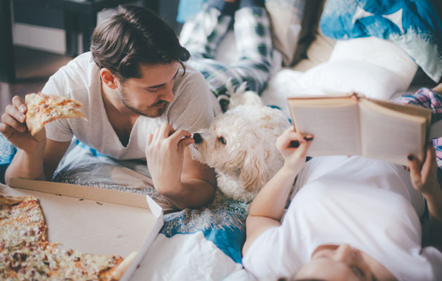 koira seuraa herkuttelua