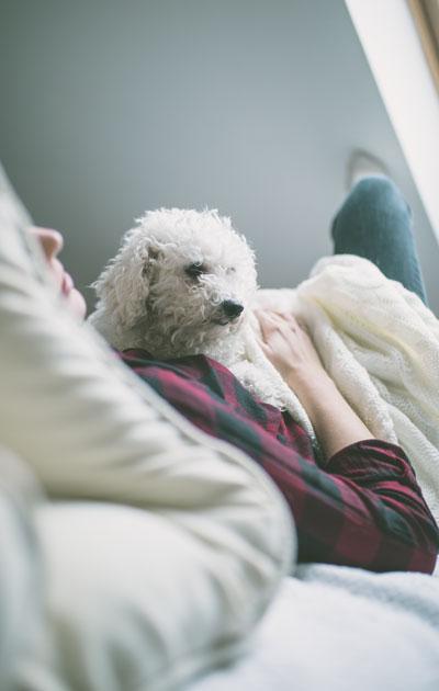 koira sängyssä