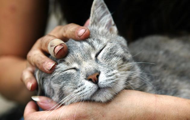 Kuva - Nukutko lemmikkisi kanssa? Punkki voi siirtyä eläimestä ihmiseen