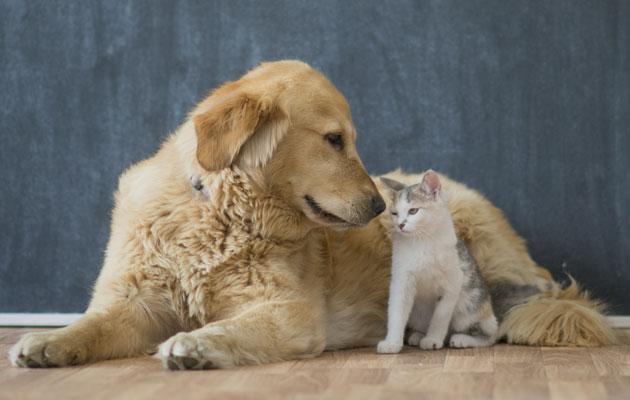 Koira ja kissa ovat ystävät