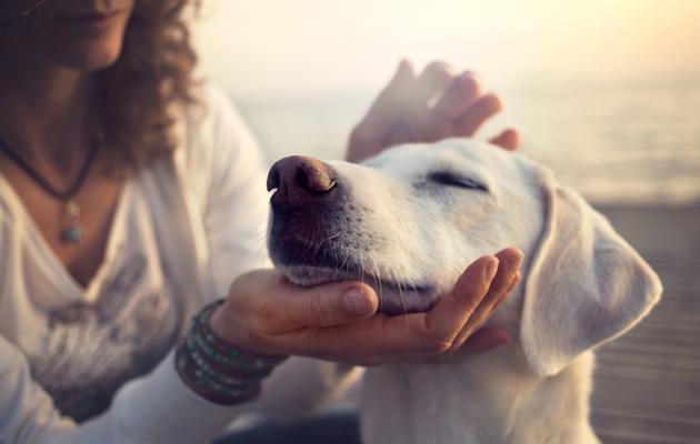 Koira on omistajalleen uskollinen seuralainen.