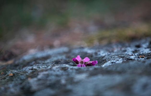 Kukka kuppikivessä