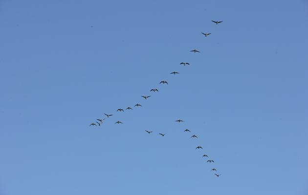 Testaa, kuinka hyvin tunnet linnut