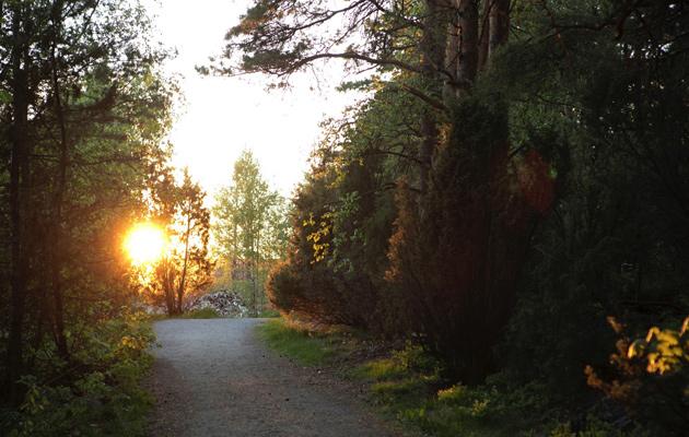 Metsä ja auringon valo