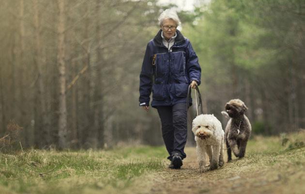 Kävely kannattaa. nainen lenkittää koiriaan.
