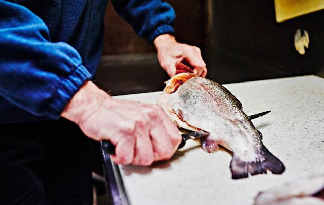 Magnus Nyholm perkaa kalaa