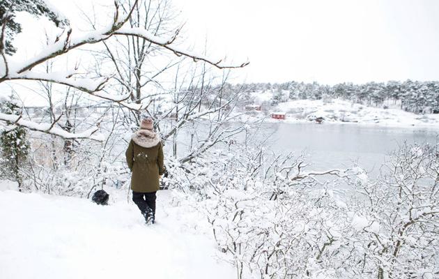 Aamu lumihangessa