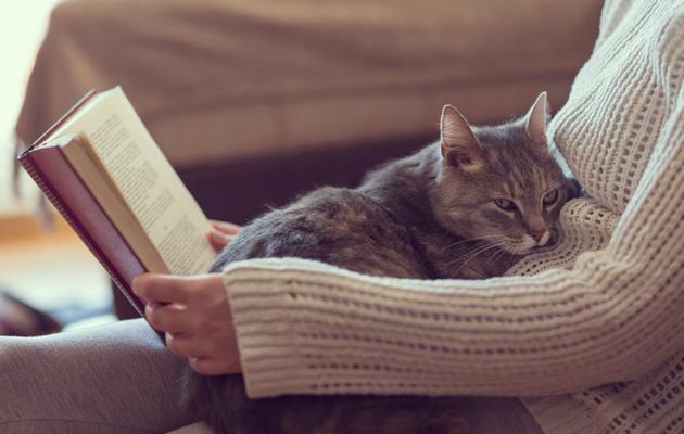 Kissa on hyvä kumppani omistajalleen.
