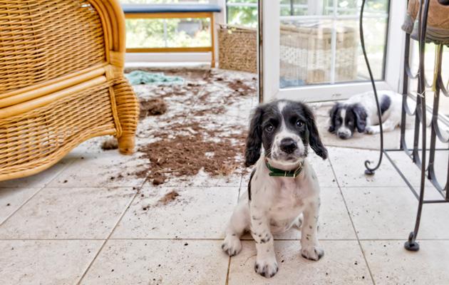 Koiran vanha omistaja alkoi vainoamaan meitä!:(