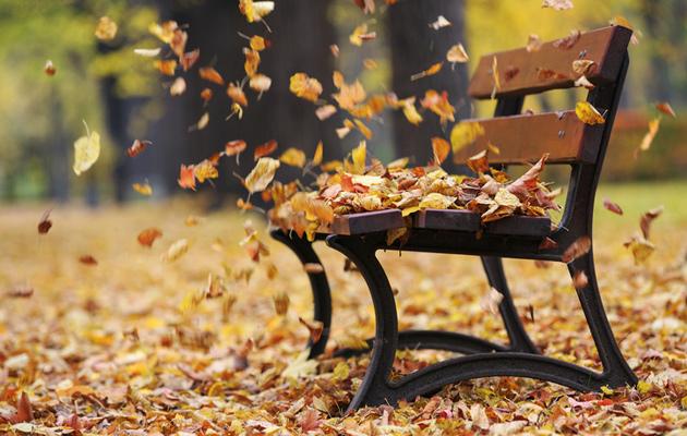 Puiden lehdet putoavat syksyllä, jotta puu pysyy hengissä talven yli.