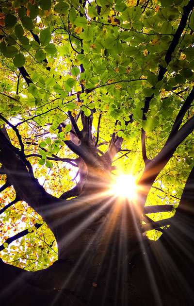 Aurinko paistaa puiden lomasta.