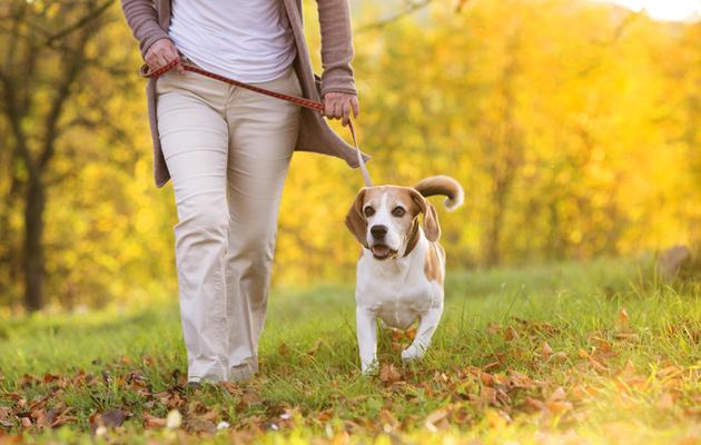 Koira on hyvää lenkkeilyseuraa.