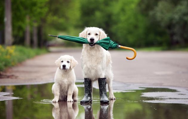 Koiran omistaminen palkitsee monin tavoin.