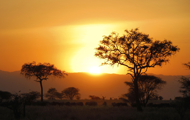 iStock-Safari