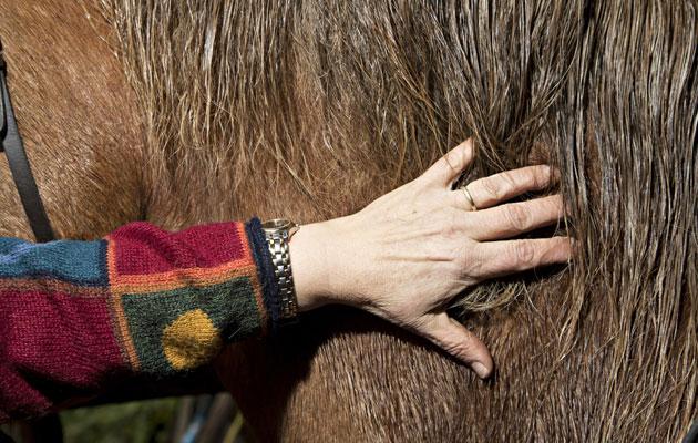 Hevonen antaa terapiaa.