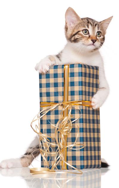 Kissa ja lahjapaketti