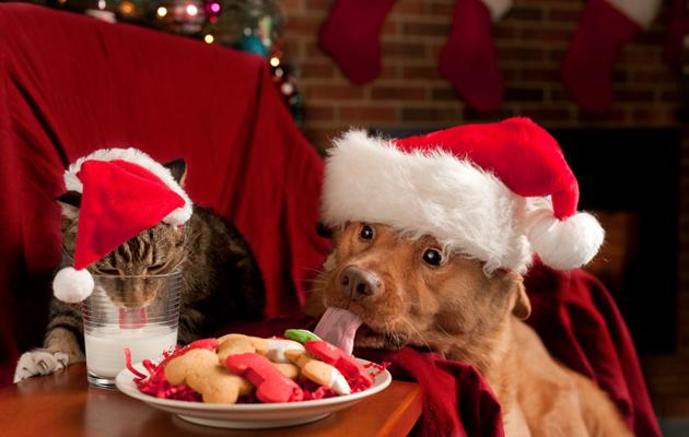 Kuva - Lemmikinomistaja, ole huolellinen jouluherkkujen ja joulukoristeiden kanssa – muista nämä eläinlääkärin 12 neuvoa!