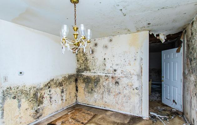 Homeinen talo on täynnä kosteusvaurioita.