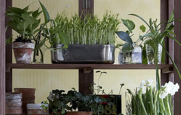 Huonekasvit tarvitsevat erilaista hoitoa talvella ja kesällä-.