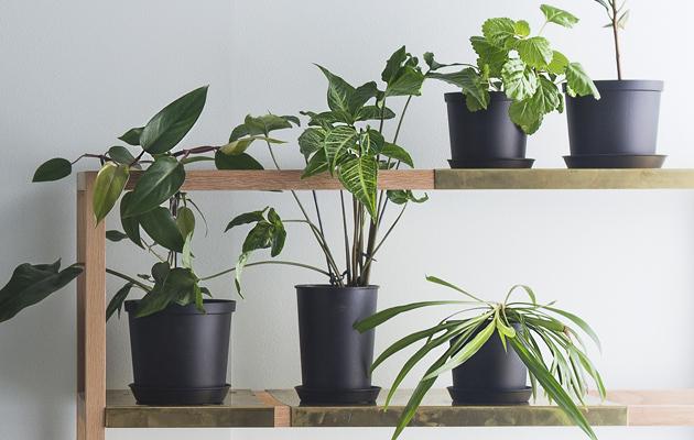 huonekasvien lannoitus