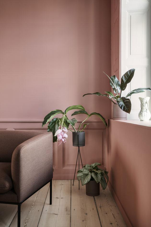 kasveja ruukuissa