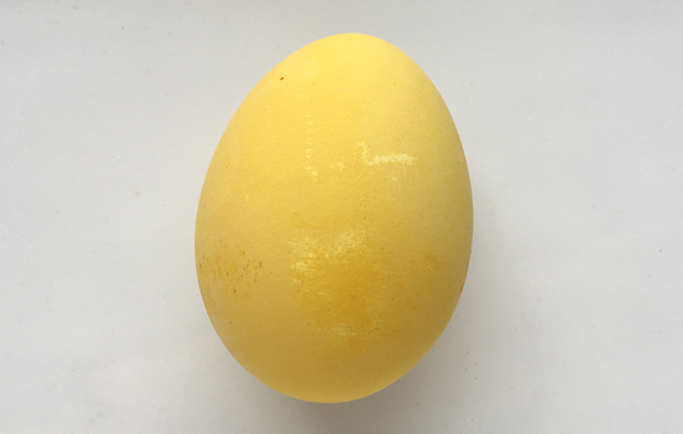 currylla värjätty kananmuna