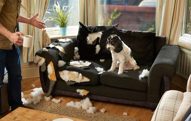 koira riehuu korvaako kotivakuutus