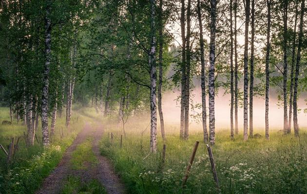 metsä, katso pohjoista taivasta, jenni haukio, runo, runous, jenni haukio runokokoelma