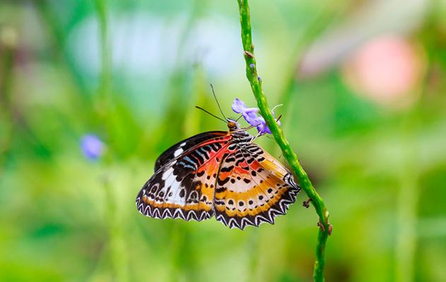 perhonen, runo, runous, runoja eläimistä, eläinruno, perhosruno