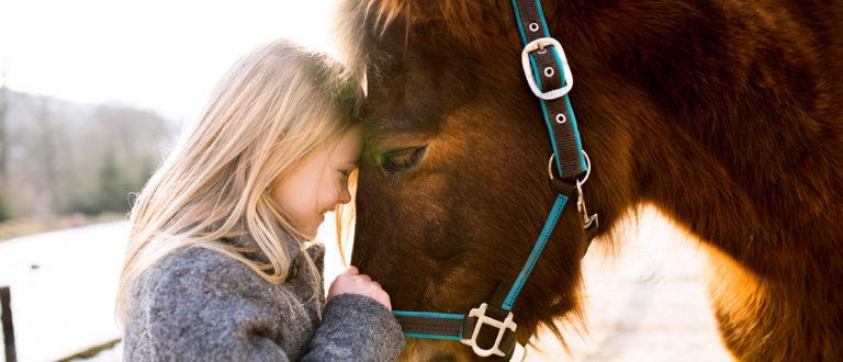 eläinrunot, runo, runous, eläimet, eläinrakas, runo hevosesta