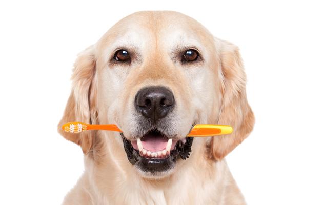 Kuva - Hoidatko lemmikkisi suuta oikein? Lue 5 eläinlääkärin vinkkiä!